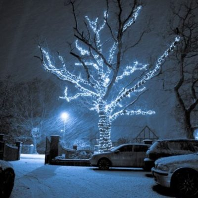 branch wrapped illuminated tree in the snow